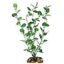 Aqueon 09809 Begonia Aquarium Plant, 9-Inch