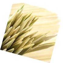 100 Bamboo Skewers - 12 Inch