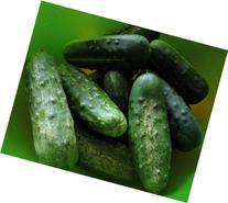 100+ Cucumber Seeds- Boston Pickling Heirloom