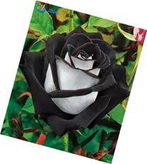 200 Pcs / Pack China Rare Black+white Rose Flower Seeds