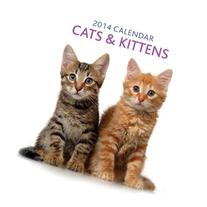 2014 Calendar: Cats & Kittens: 12-Month Calendar Featuring