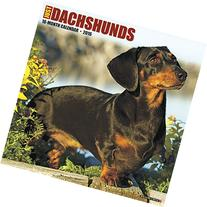 2016 Dachshunds Wall Calendar