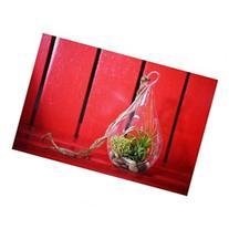 9GreenBox - Air Plant - Tear Drop Terrarium Kit with Moss
