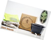 9GreenBox: Bonsai Seed Kit - Giant Sequoia