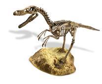Edu-Toys  Velociraptor Skeleton Model Kit