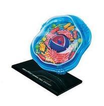 Famemaster 4D-Science Animal Cell Anatomy Model