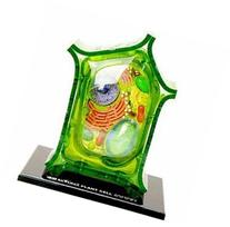 Famemaster 4D-Science Plant Cell Anatomy Model