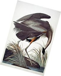 """Great Blue Heron. From """"The Birds of America""""  Pl. 211"""