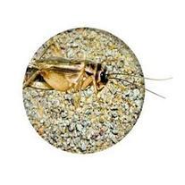 Nature Zone cricket total bites gallon