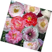 "Package of 10,000 Seeds, Shirley Mixed Poppy ""Double Mixture"
