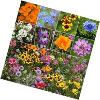 Package of 3,000 Seeds, Low Growing Wildflower Mixture  Non-