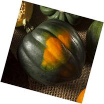 Package of 45 Seeds, Table King Acorn Winter Squash  Non-GMO