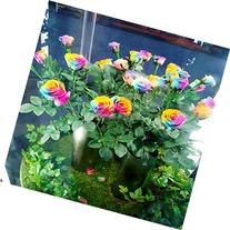 Rose Flower Seeds, 100 Pieces, Rainbow