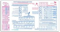 Score-Right Standard 11 Position For Baseball/Softball