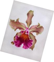 Singular Yellow and Pink Orchid