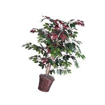 Vickerman 4-Feet Artificial Capensia Bush in Decorative
