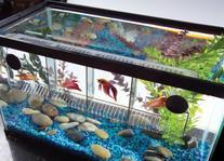 TOM Aquarium Accessories Betta Security House with Lid - 4