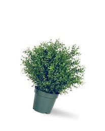 Argentia Plant - Size: 30 H x 22 W x 22 D