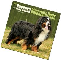 Bernese Mountain Dogs 2015 Square 12x12