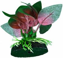 Betta Plant Red Anubias Leaf By Blue Spotted, Great For