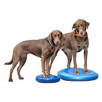 FitPAWS Canine Balance Disc