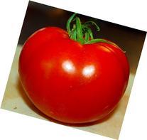 Celebrity Tomato 45 Seeds -Disease Resistant