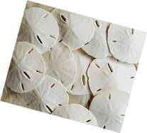 "Tumbler Home Certified - Sand Dollars 3""-3.5""set of 12 -"