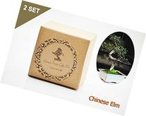 Set of 2 Chinese Elm Bonsai Seed Kit- Gift - Complete Kit