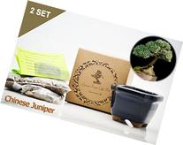 Set of 2 Chinese Juniper Bonsai Seed Kit- Gift - Complete