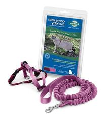 PetSafe Come With Me Kitty Harness and Bungee Leash, Large,