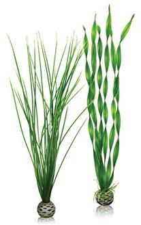biOrb Easy Plant Pack, Large