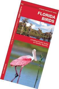 Florida Birds: A Folding Pocket Guide to Familiar Species