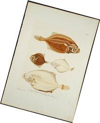 Four Flat Fish
