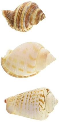 Zoo Med Hermit Crab Growth Shell, Small, 3-Pack