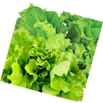 Miracle-Gro AeroGarden Salad Greens 7-Pod Seed Kit