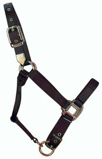 Hamilton 1-Inch Nylon Adjustable Horse Halter, Small Size