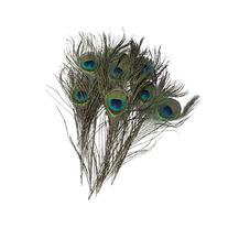 Domire Natural Peacock Feathers 10-12'' 20Pcs
