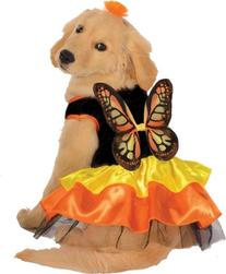 Beautiful Butterfly Costume for Pets