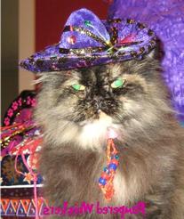 Pinata Purple Miniature Sombrero Hat for Cats and Dogs
