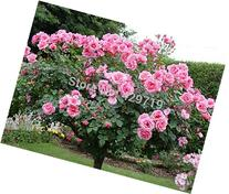 100pcs rare flower Rose tree Seeds, DIY Home Garden Potted ,