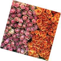 12x12 in. Rebecca Plotnick Roses for Sale on Rue de Grenelle