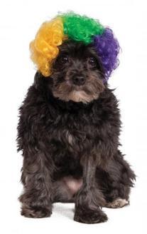Rubies Costume Company Mardi Gras Afro Pet Wig, Medium/Large