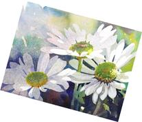 Shasta Daisy Daydream, Giclée Print of White Daisies in the