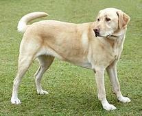 Bayer Expert Care Tapeworm Dewormer Dog Tablets size: 5