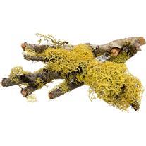 T-Rex Terra Accents Lichen Sticks