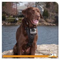 Kurgo Tru-Fit Smart Dog Harness with Camera Mount, Medium,