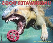 Underwater Dogs 2015 Wall Calendar