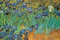 Vincent Van Gogh Garden of Irises Art Print Poster - 24x36